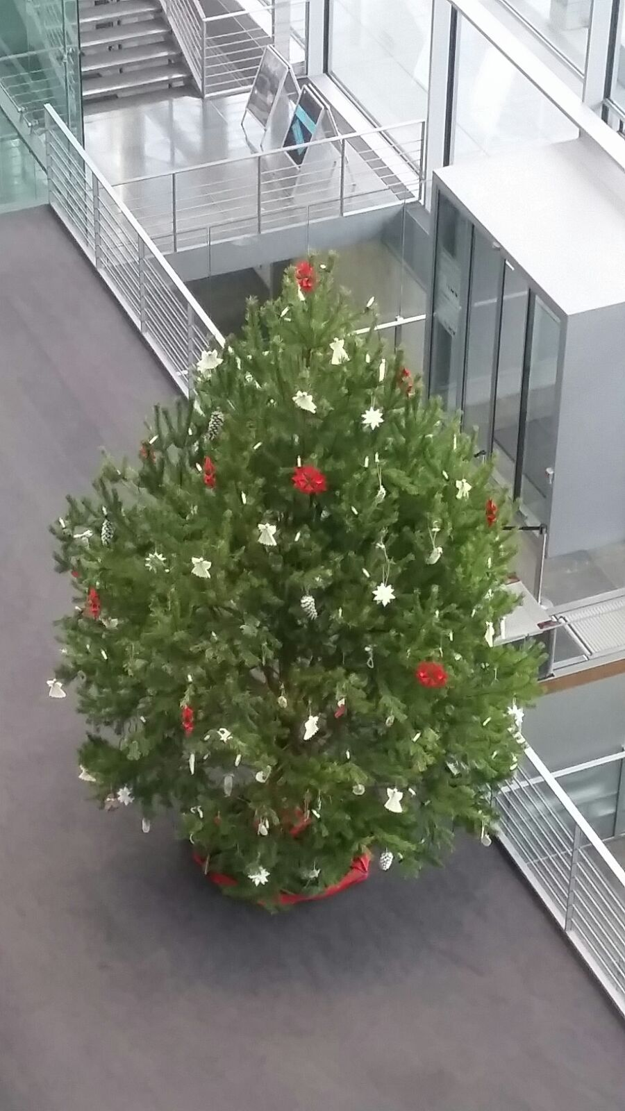 weihnachtsbaum_24-11-2016